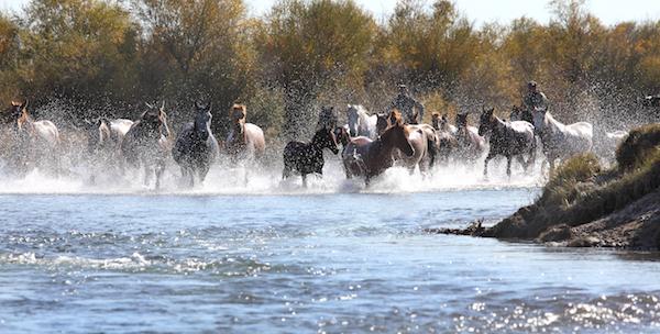 Näkökulma: Horses and Humans in Inner Asia